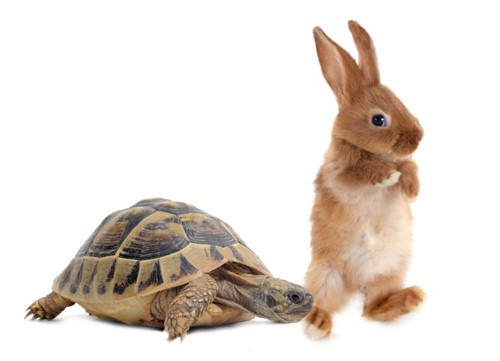 Diversification v Concentration: A tortoise and hare story